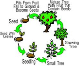 Math & Science Mini-Book: Favorite Plant Life Cycle~ Tally Chart & Word Problems