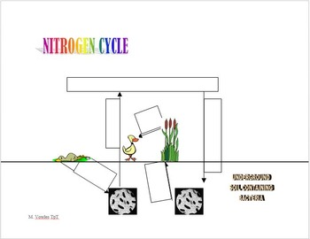 Matter Cycles in Ecosystems:  Water cycle, Carbon cycle, Nitrogen cycle