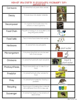 Matter & Energy in Ecosystems Vocabulary Sort