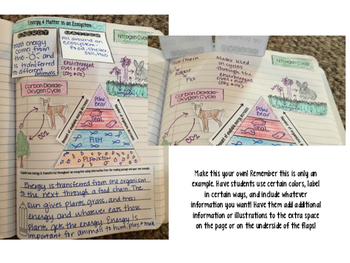 Matter and Energy in Ecosystems Reading Comprehension Interactive Notebook