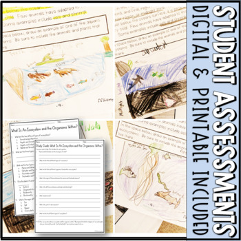 5th Grade NGSS // Matter and Energy in Organisms and Ecosystems // Lesson Bundle