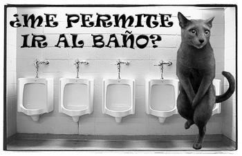 """¿Me Permite Ir Al Baño? Can I Go to the Bathroom? Classroom Cat Poster 17"""" x 11"""""""