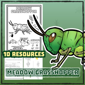 Meadow Grasshopper -- 10 Resources - Coloring Pages, Reading & Activities
