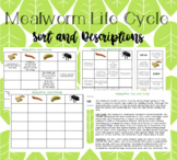 Mealworm/Beetle Life Cycle: Quick Read and Differentiated Sort