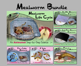 Mealworm Bundle - Animated Step-by-Steps® - Regular