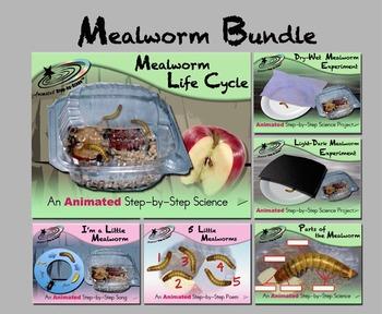 Mealworm Bundle - Animated Step-by-Steps® - Regular