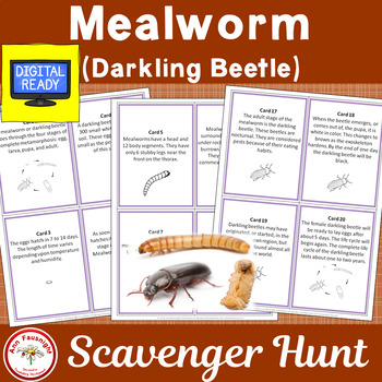 Mealworm (Darkling Beetle) Life Cycle Scavenger Hunt