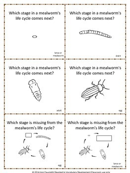 Mealworm (Darkling Beetle) Life Cycle Share Share Switch