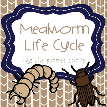Mealworm Life Cycle Unit