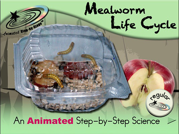 Mealworm Life Cycle - Animated Step-by-Step Science Project - Regular
