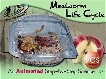 Mealworm Life Cycle - Animated Step-by-Step Science Project PCS Symbols