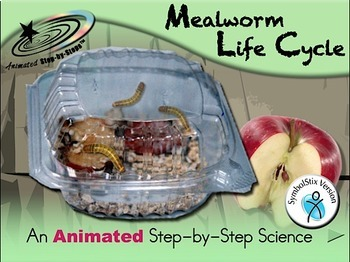 Mealworm Life Cycle - Animated Step-by-Step Science Project - SymbolStix