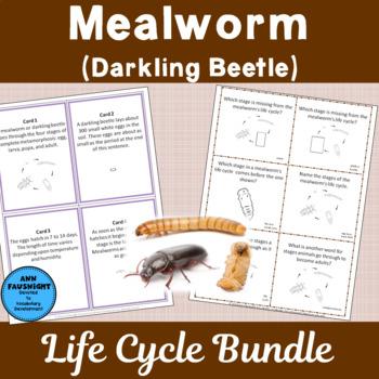 Mealworm Life Cycle Bundle
