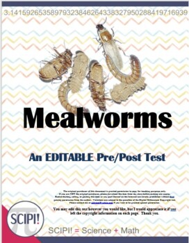 Mealworm (Life Cycle) Science Test