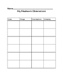 Mealworm Observation Chart