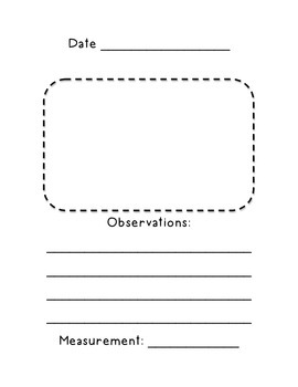 Mealworm Observation Journal