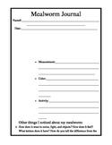 Mealworm Observation Journaling