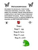Mealworm Observation Packet