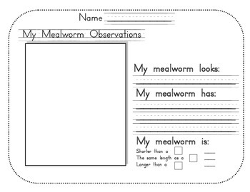 Mealworm Observations recording sheet