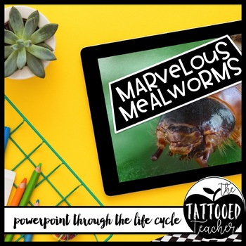 Mealworms A Journey through a Complete Lifecycle powerpoint