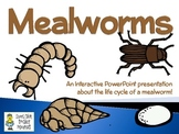 Mealworms ~ An Interactive PowerPoint Presentation of their Life Cycle
