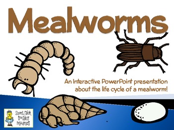 Mealworms ~ An Interactive PowerPoint Presentation of thei