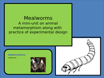 Mealworms: Mini Unit With Experimental Design