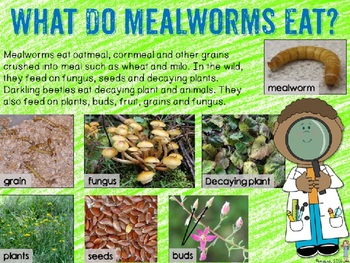 Mealworms for Google Drive