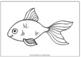 Measurement Packet (Fish)