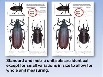 Measuring Animals - Measurement Practice (Standard and Metric Units)