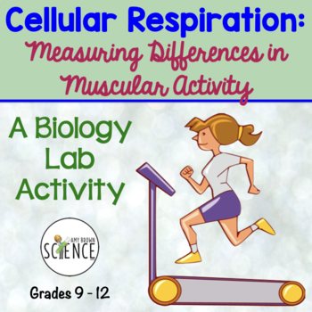 Cellular Respiration:  Measuring Differences in Muscular Activity