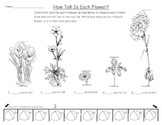 Measuring the Height of Flowers