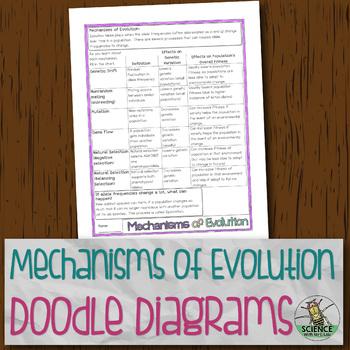 Mechanisms of Evolutionary Change Chart Doodle Diagrams