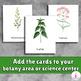 Medicinal Plants Montessori 3-part cards - Vocabulary Identification cards