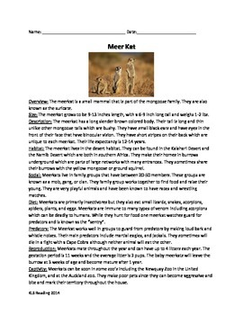 Meerkat - Review article questions vocabulary writing word search actvities