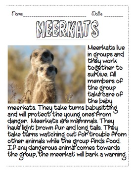 Meerkats Non Fiction Reading Passage