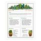 Meet the Teacher Cactus Themed Newsletter Template EDITABLE .doc