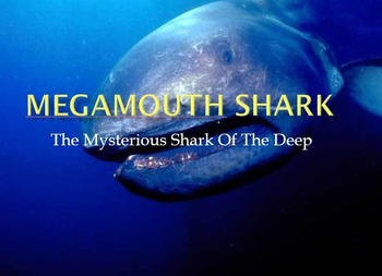 Mega Mouth Shark - Power Point - History Facts Pictures