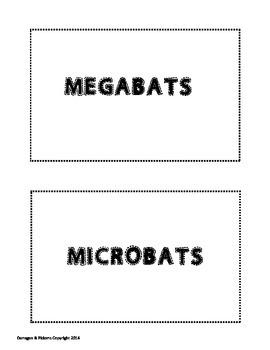 Megabats & Microbats