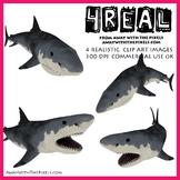 Megalodon Dinosaur Shark - Free For Shark Week!