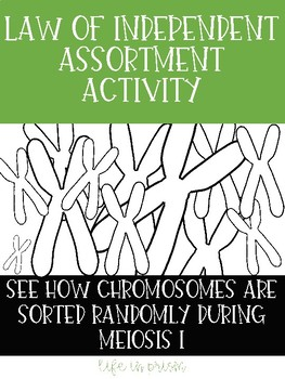 Meiosis Activity Independent Assortment