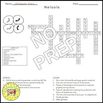 Meiosis Biology Science Crossword Coloring Worksheet Middle School