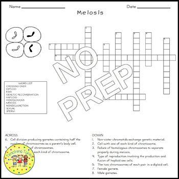 Meiosis Crossword Puzzle
