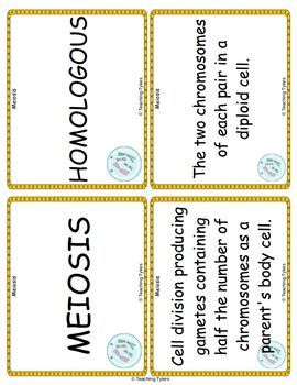 Meiosis Vocabulary Cards