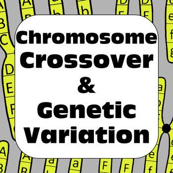 Meiosis: Chromosome Crossover & Genetic Variation