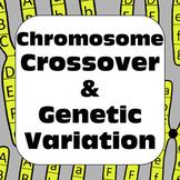 Genetics Meiosis Chromosome Crossover & Genetic Variation High School Biology