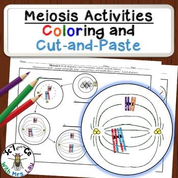 Meiosis Diagram Activities for High School Biology