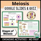 Meiosis Digital INB activities and Quiz | Google Slides & Forms