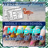 Meiosis Doodle-it! Notes