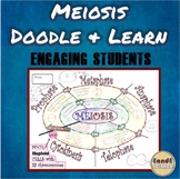 Meiosis- Life Science Doodle & Learn Notes (Biology & Anatomy)